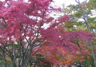 高尾山の紅葉(頂上)