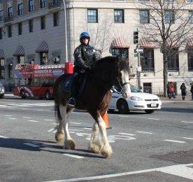 ワシントンD.C. 騎馬警察