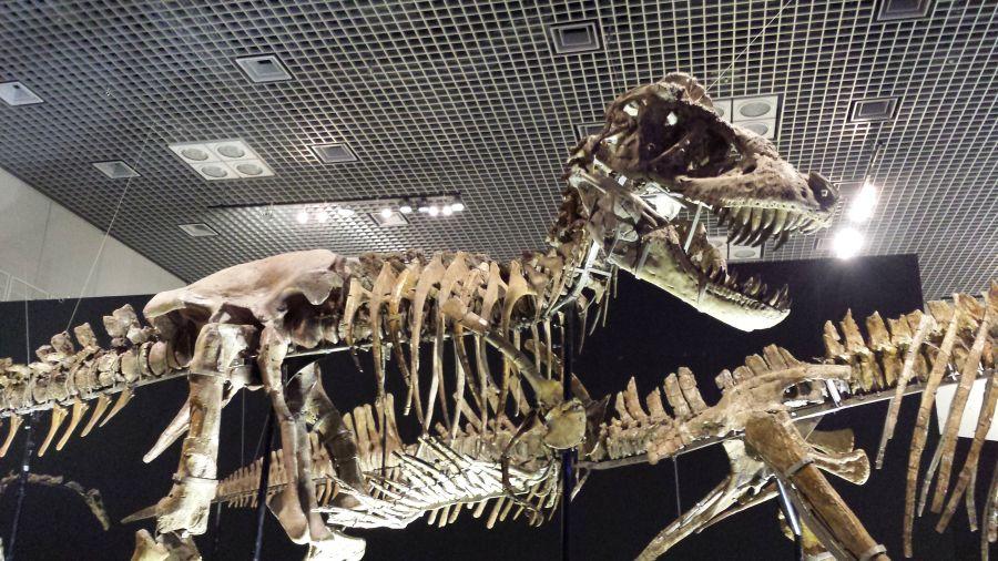 「大恐竜展」ゴビ砂漠の驚異